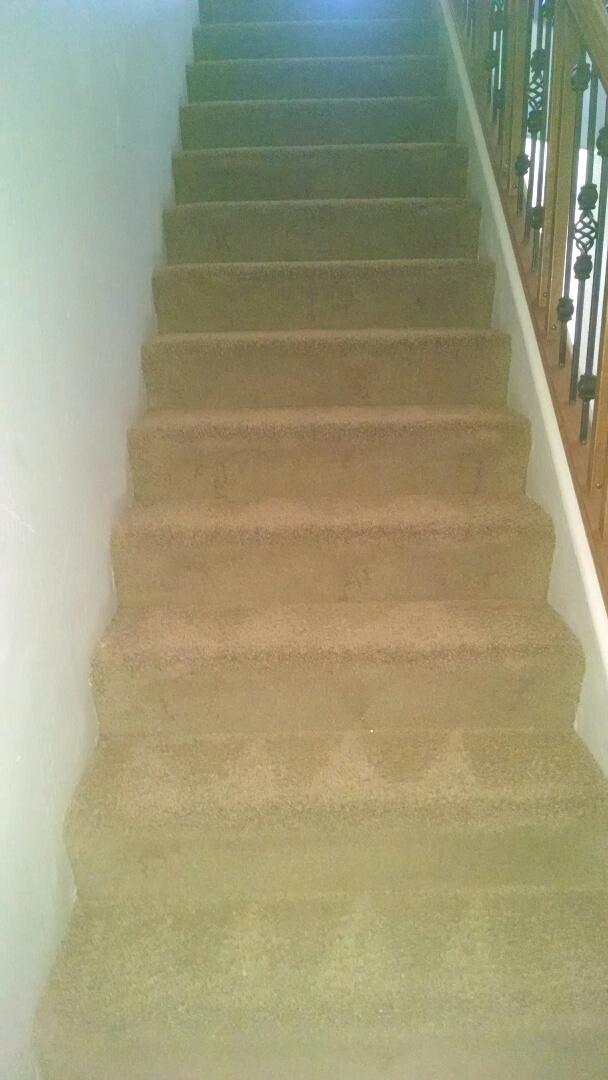 Cleaned carpet for a new PANDA family in San Tan Valley, AZ 85153