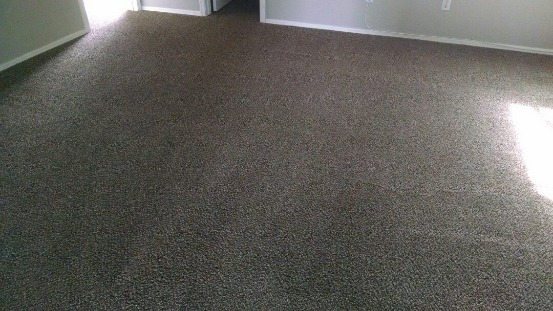 Cleaned carpet for a new PANDA family in Apache Junction, AZ, 85119