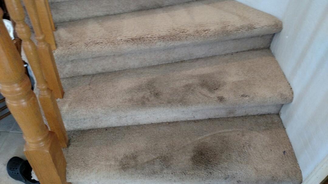 Gilbert, AZ - Cleaned carpet for a new PANDA family in Gilbert AZ 85233.