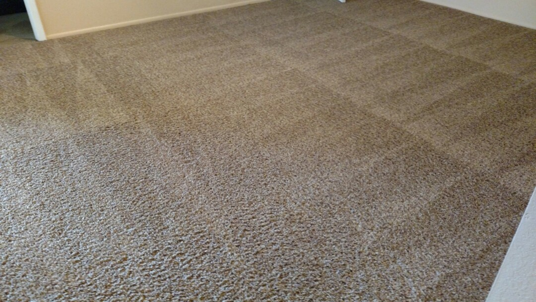 Cleaned carpet for a new PANDA family in Tempe AZ 85284.