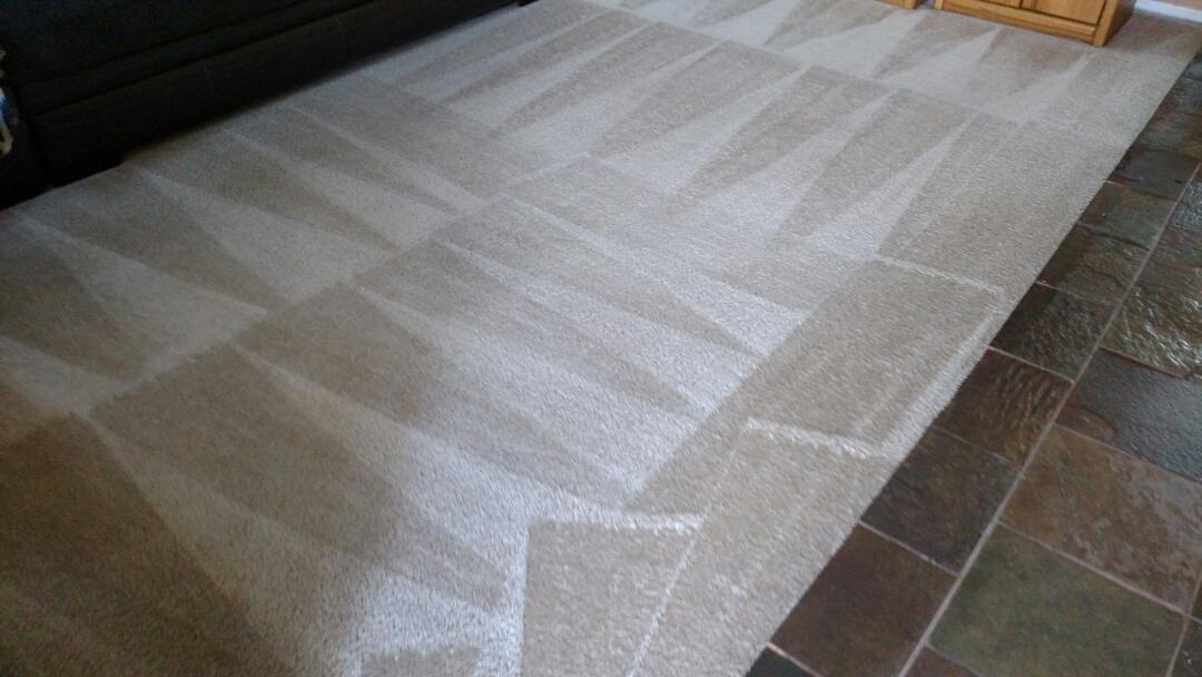 Gilbert, AZ - Cleaned carpet and extracted pet urine for a regular PANDA family in Gilbert AZ 85296.