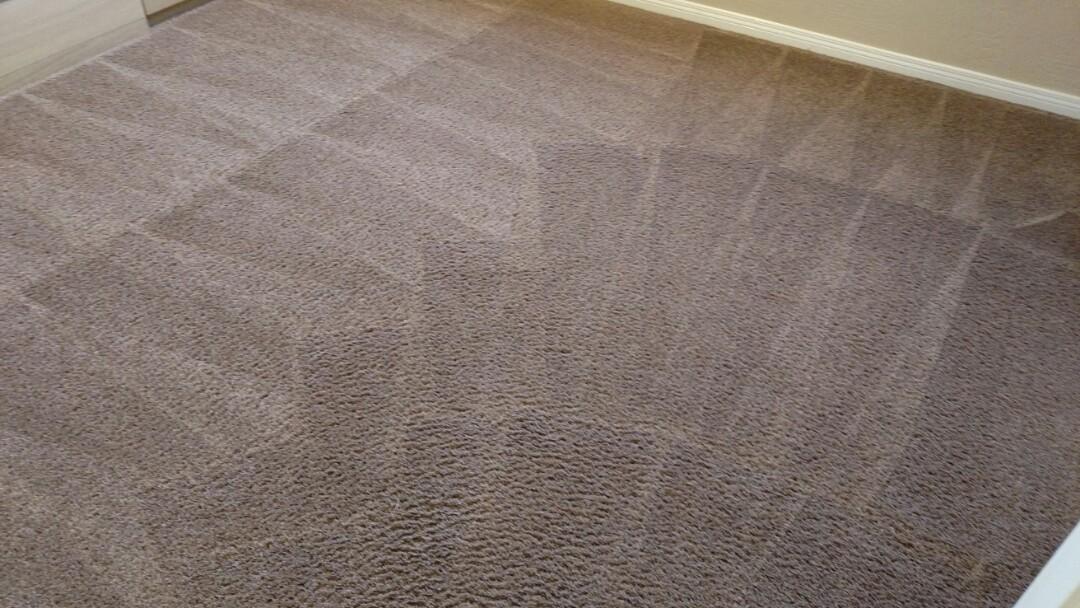 Cleaned carpet for a regular PANDA family in Gilbert AZ 85295.