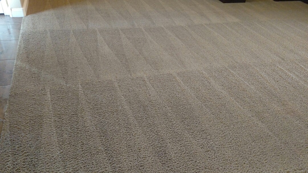 Clean carpet and extracted urine for a new PANDA family, in Higley Park, Gilbert AZ 85296.