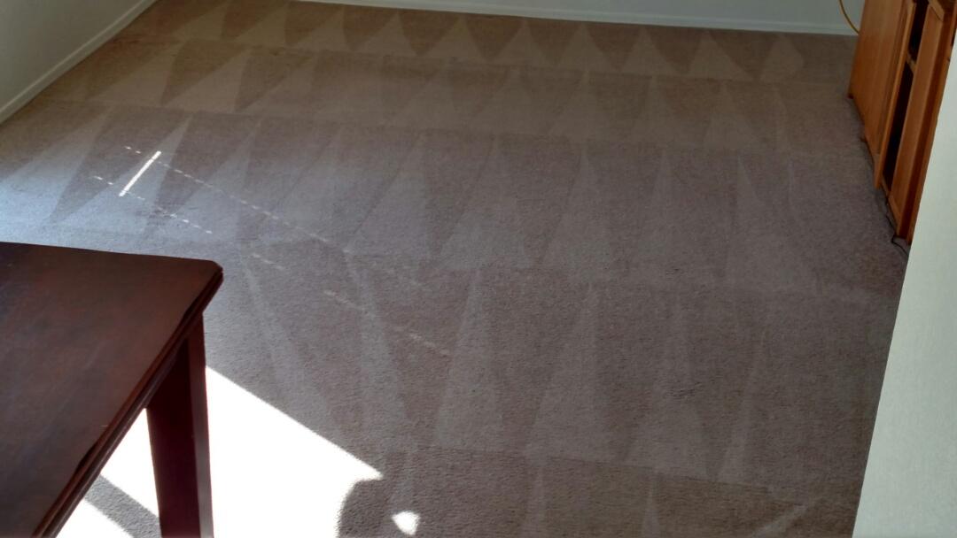 Clean carpet for a new PANDA family in Chandler AZ 85226.