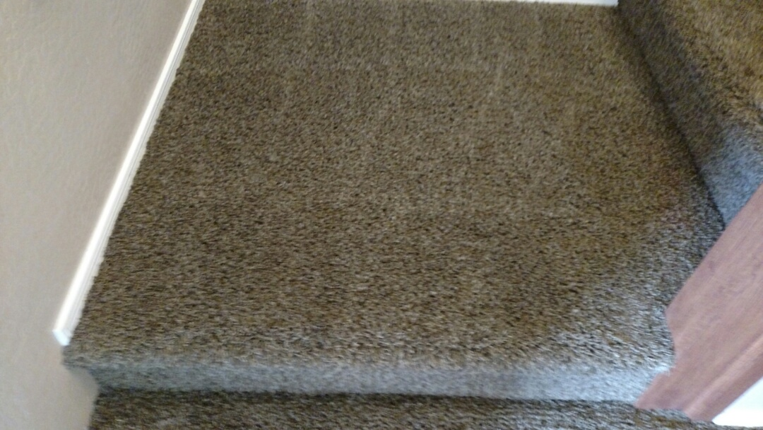 Cleaned carpet, extracted dog urine, cleaned and sealed tile for a new PANDA family in Lyons Gate, Gilbert, AZ 85295.