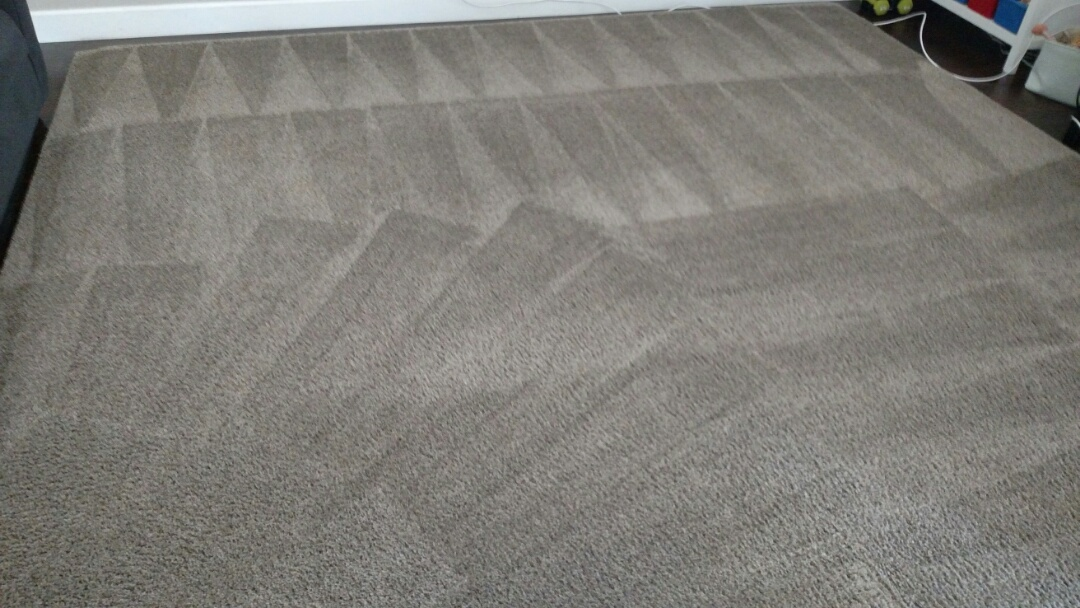 Cleaned carpet & an area rug, and extracted dog urine, for a regular PANDA Family in Gilbert, AZ 85298.