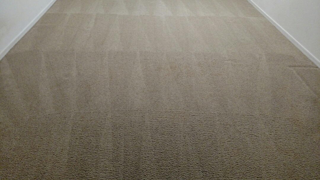 Cleaned carpet, extracted dog urine, and cleaned tile for a new PANDA customer in Gilbert, AZ 85298.