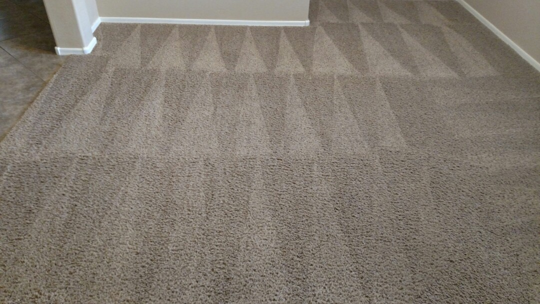 Cleaned carpet and extracted pet urine for a new PANDA family in Lyons Gate, Gilbert, AZ 85295.