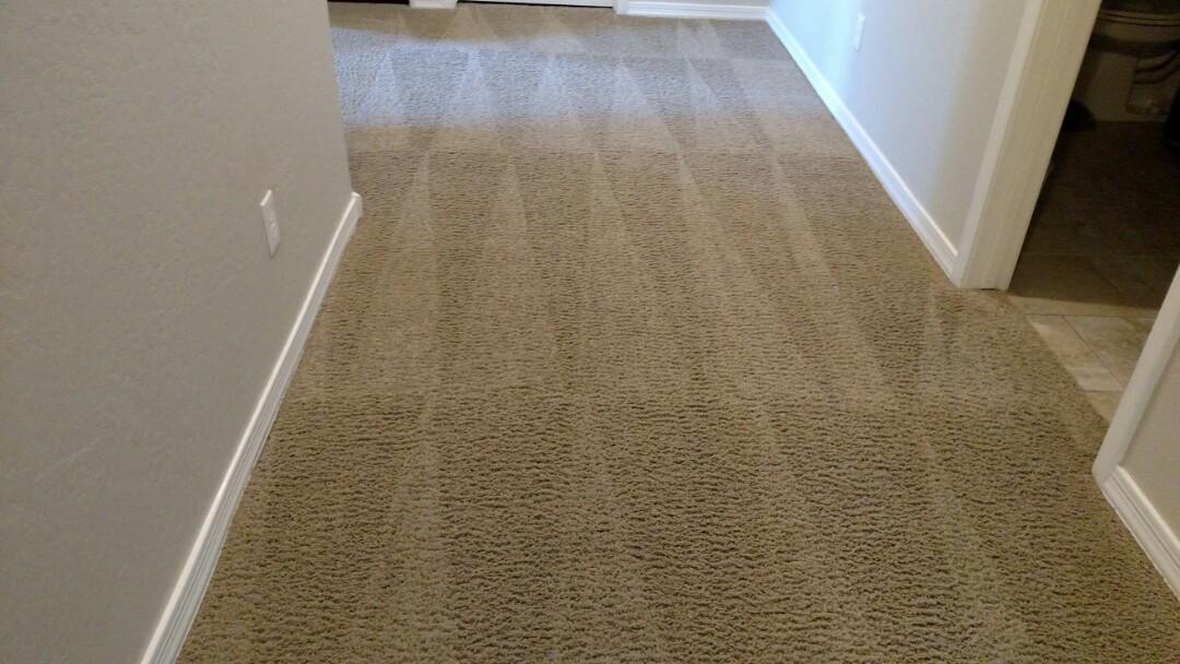 Cleaned carpet for a new PANDA family in Lyons gate, Gilbert, AZ