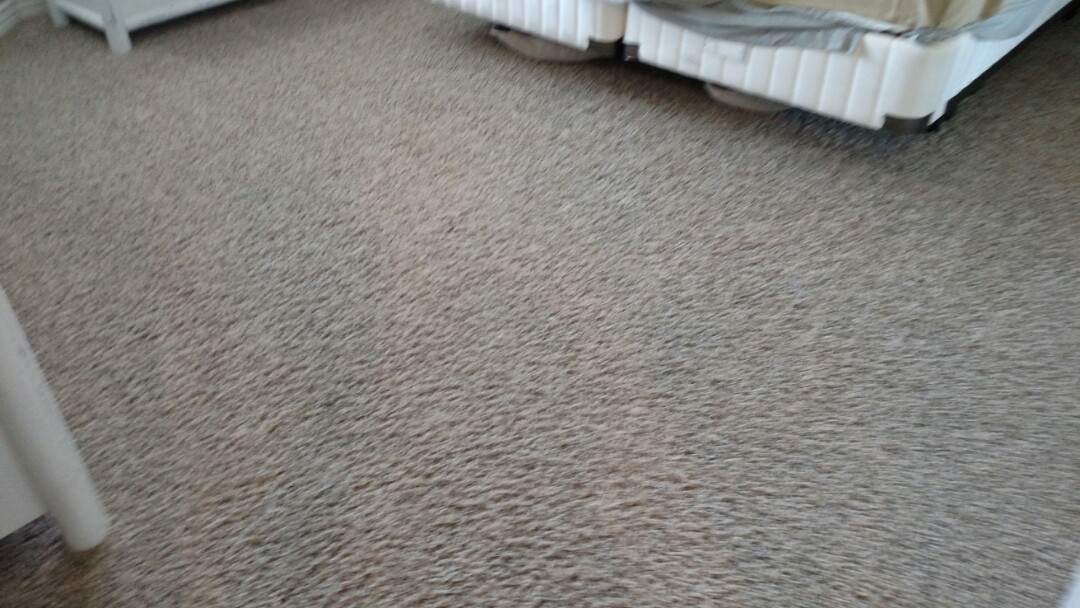 Cleaned carpet and extracted dog urine for a regular PANDA family and Queen Creek, AZ 85142.