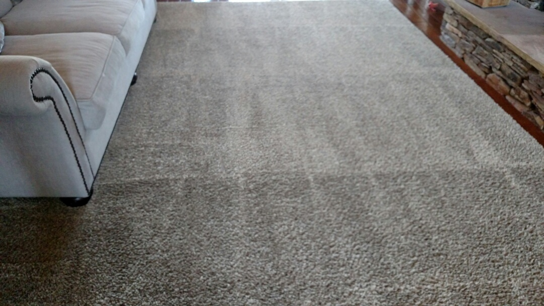 Cleaned carpet and area rugs, and extracted pet urine for a regular PANDA family in Scottsdale, AZ 85260.