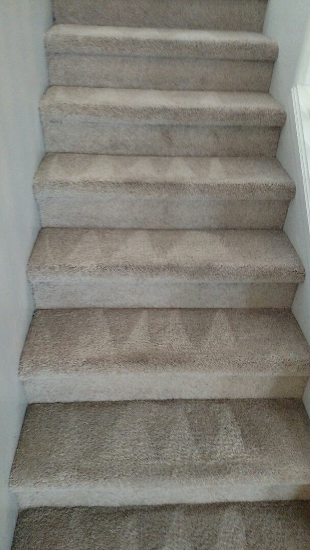 Gilbert, AZ - Cleaned carpet and extracted pet urine for a new PANDA family in Lyons Gate, Gilbert 85295.