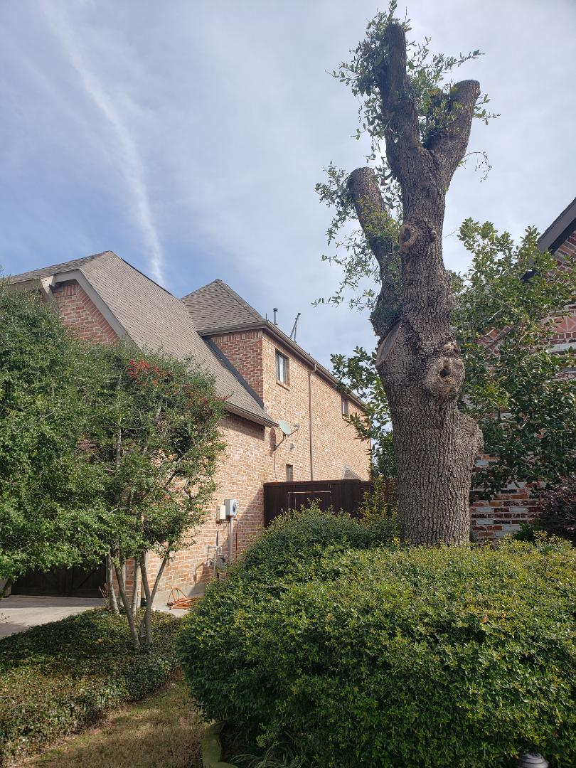 Plano, TX - Wind damage. Hail damage. Fence stain. Gutter replacement. Owen's corning. Shingles.