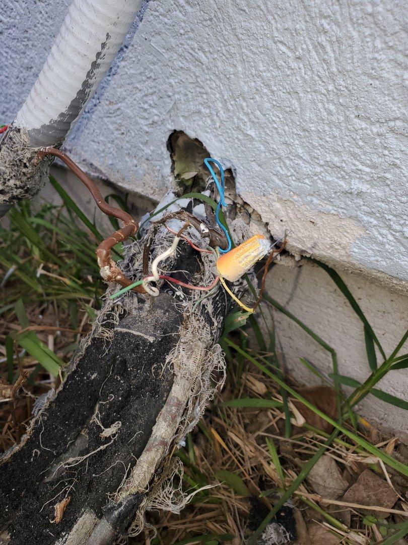 Corpus Christi, TX - Ac repair in corpus christi texas. Dogs are control wires.