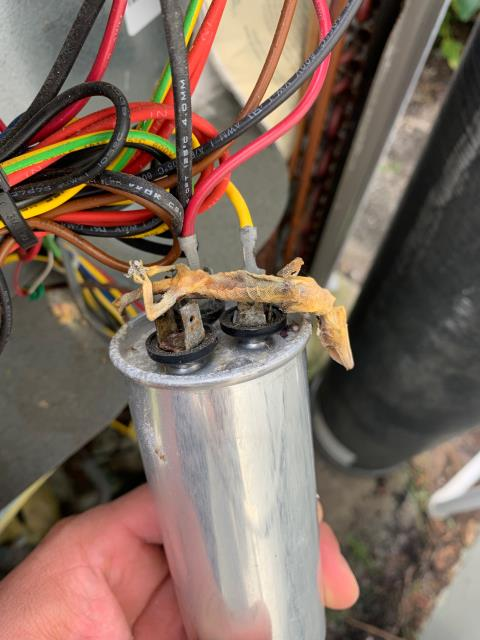 Hobe Sound, FL - Air conditioning system not working; we found lizard stuck between capacitor terminals for compressor shorting capacitor out.  We replaced capacitor and check cooling operations and system was working properly at time of service.