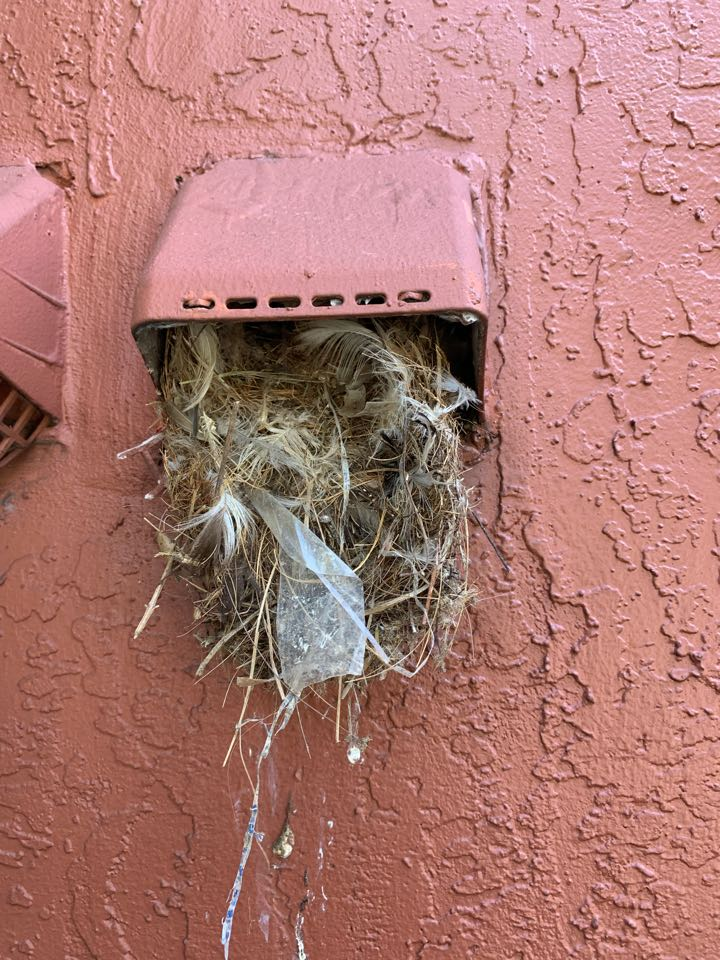 Birds building a nest in lake worth