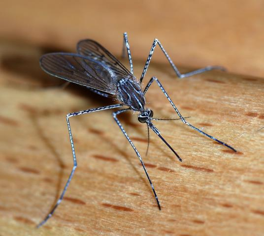 Huntsville, AL - One of our technicians, rendered 3 services for a customer. The services were a monthly mosquito, a monthly pest service, and a yearly termite inspection.