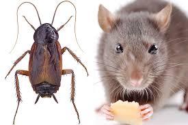 Jasper, AL - Pest control