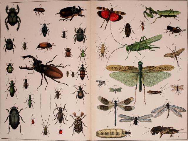 Cullman, AL - Monthly residential Pest Control Cullman Alabama