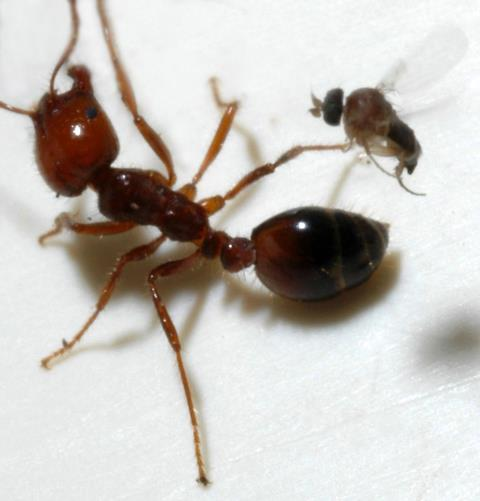 Hanceville, AL - One of our pest control technicians, rendered a monthly service for the problem of ants on a residential dwelling in Hanceville Al.