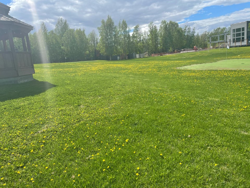 Anchorage, AK - Time to address this sea of dandelions! Though it is kind of pretty.... no worries, we will get this lawn in shape with gorgeous lines in no time