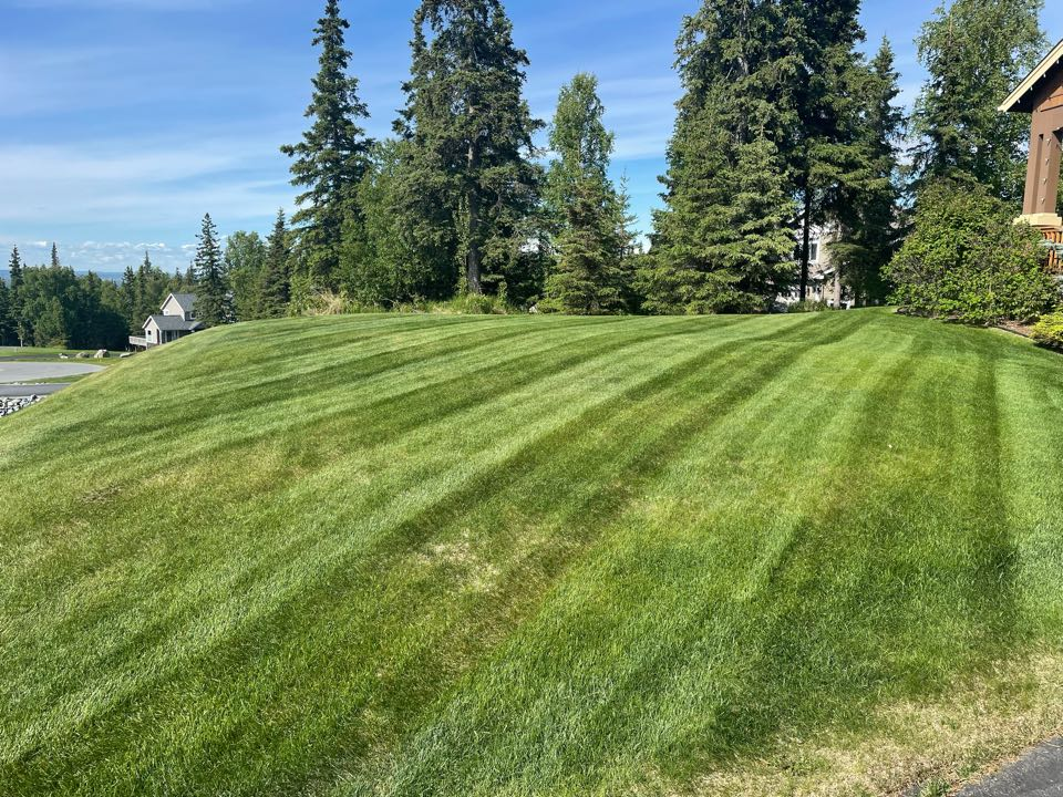 Anchorage, AK - As Tony the Tiger would say: those lawn stripes are GRRRREAT!