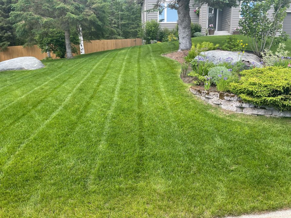 Anchorage, AK - Beautiful landscaping complemented by a beautiful lawn!