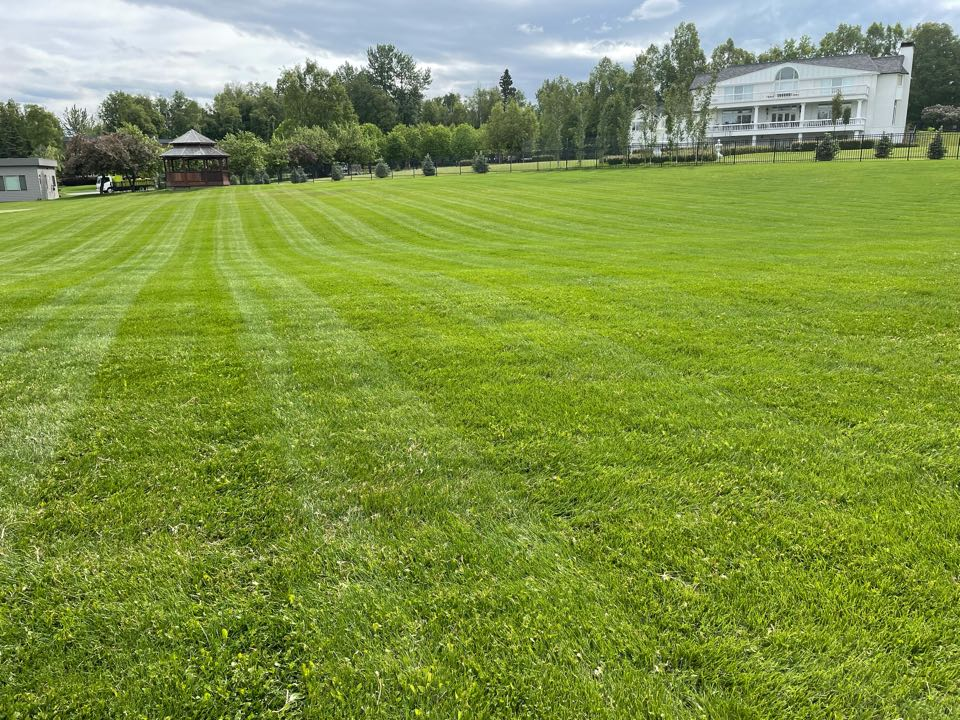 Anchorage, AK - New walker mulching mower sure beats the scag. What a beautiful lawn here. 2 more weeks and another round of broadleaf herbicide to finish off those dandelions.