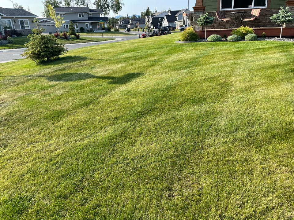 Anchorage, AK - It's not always the size of the lawn the matters, a little water and lots of sun does the trick too. Corner lot, for the win!
