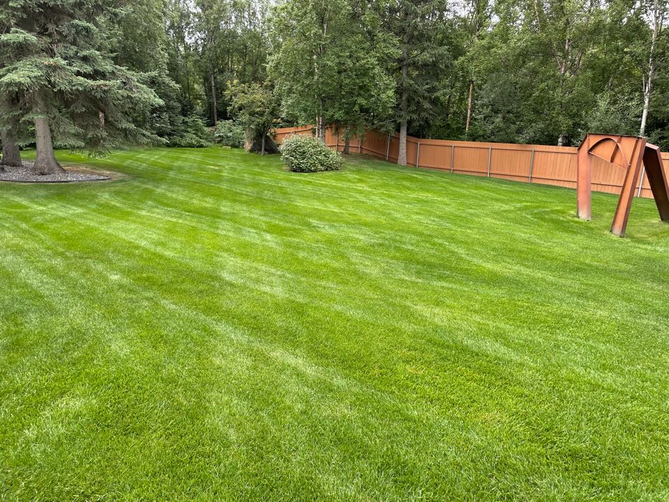 Anchorage, AK - Not all lawns, are tended to equally. Water. Fertilizer. Zero traffic. Perfection.