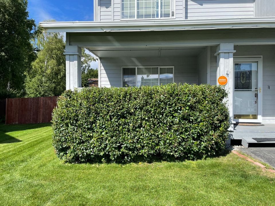 Anchorage, AK - Trimming hedges on this gorgeous warm Tuesday afternoon!