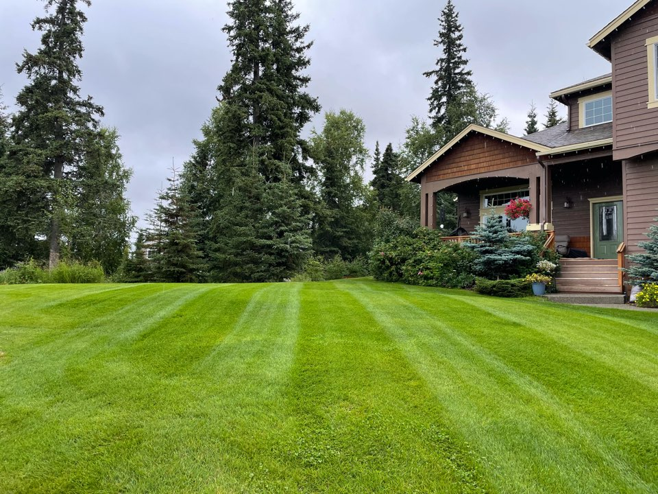 Anchorage, AK - Rainy season is upon us. Leaving behind some hydrated lawns and pretty stripes!