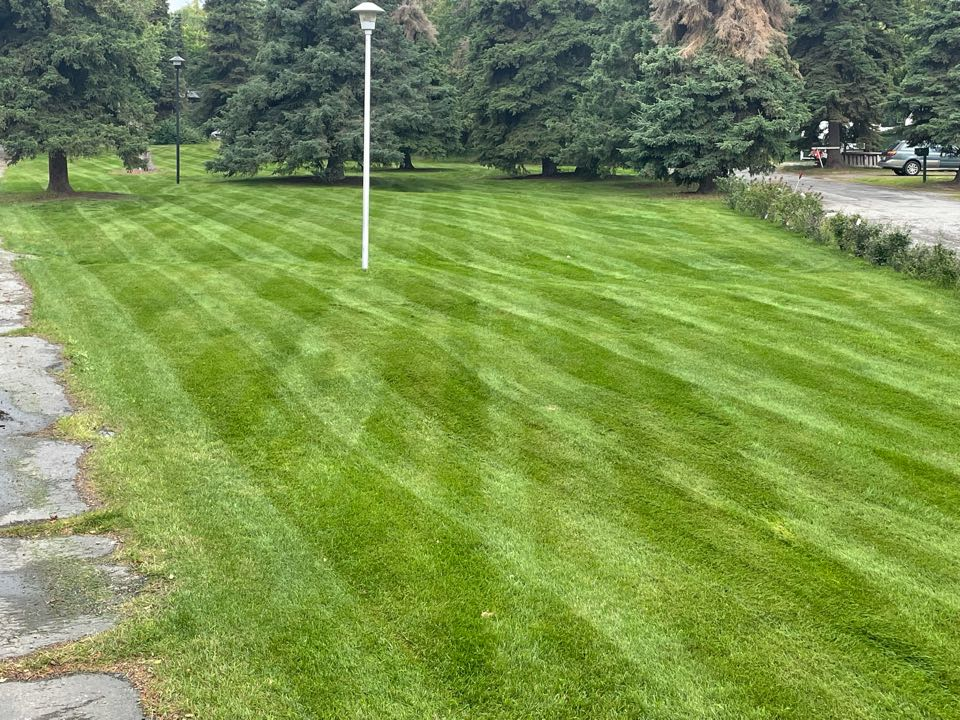 Anchorage, AK - That rain sure helped this lawn! Fresh stripes from the #walker mulching mower