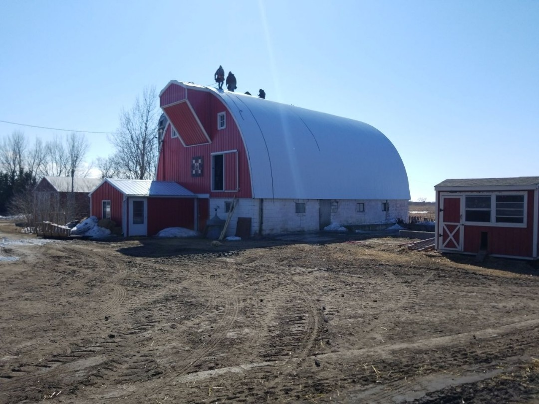 Callaway, MN - Homeowner is excited to have his new steel barn roof replaced today.