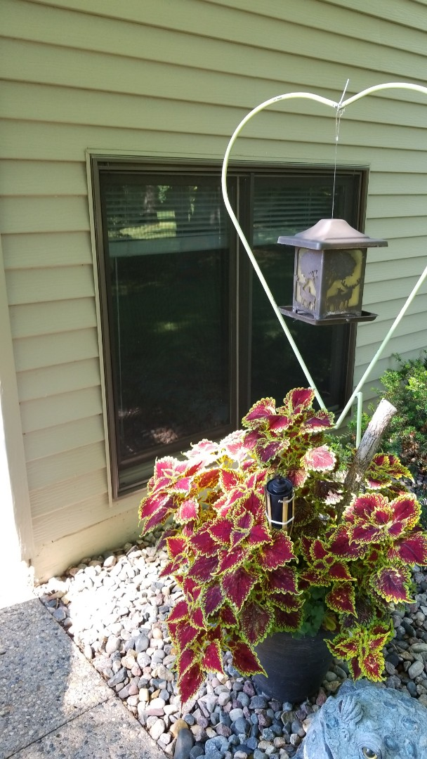 Detroit Lakes, MN - Homeowner asking about replacement windows.