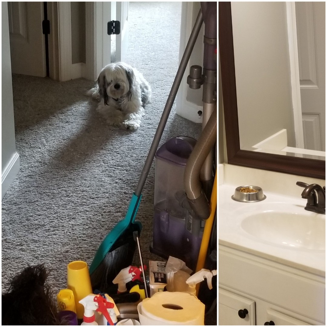 Greensboro, NC - One of our houses we are cleaning today has a dog that loves us and a cat that always hides from us :) Our chemicals are environmentally and pet friendly. Greensboro Cleaning Servive. Greensboro Maid Service. Pet friendly cleaning service near me. Green Cleaning Service.