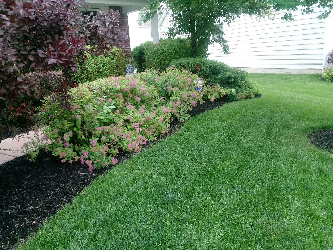 New Albany, OH - Cleaning up these flower beds and adding double black mulch to help control the weeds.