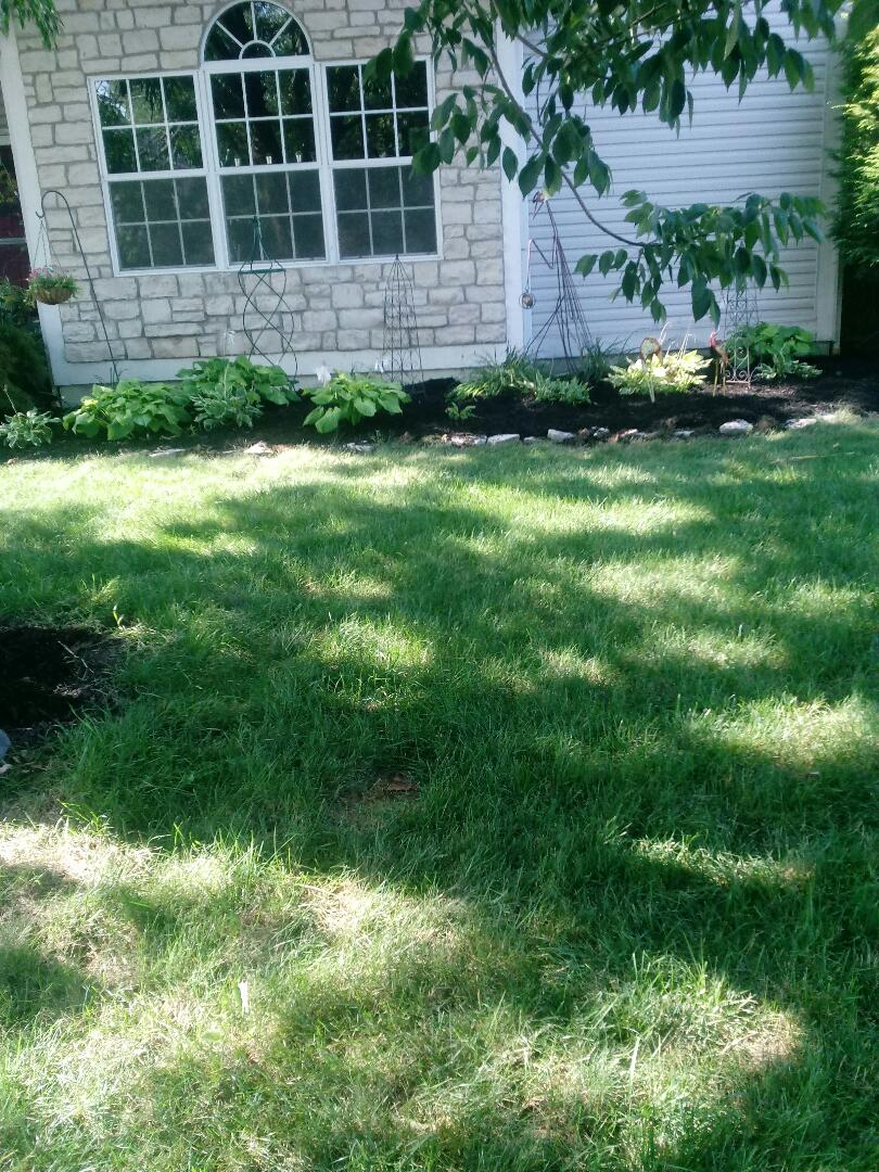 Westerville, OH - Edge and mulch in westerville happy friday