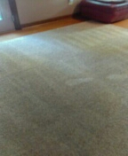 Richmond, VA - Carpets cleaned up great and look at this remnant I gave her free cleaning on !