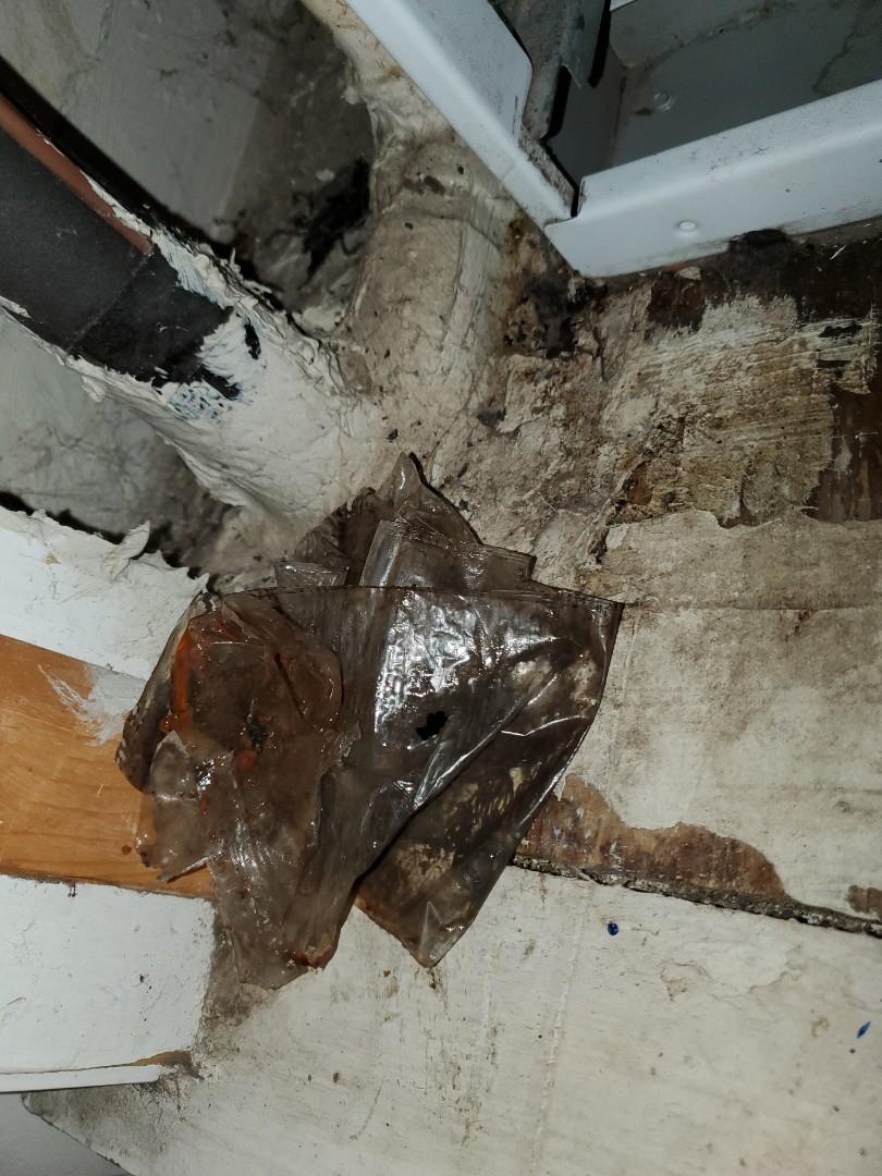 Keystone Heights, FL - Cleared a drain