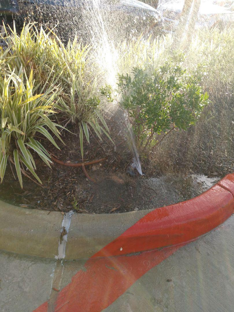 Sprinkler drip irrigation leak commercial strip center