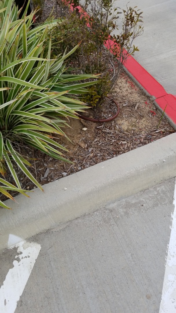 Spring, TX - Drip system repair commercial area