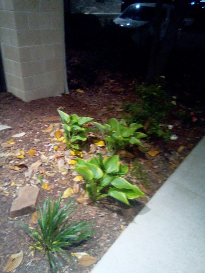Allen, TX - Sprinkler system repairs