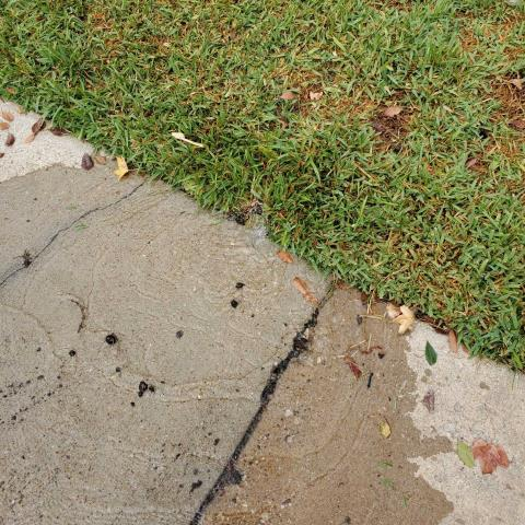 Crowley, TX - Sprinkler Head broken off