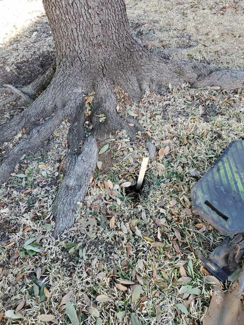 Coppell, TX - Sprinkler system repairs, Broken head by tree.