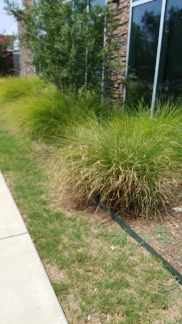 Allen, TX - Broken sprinkler heads commercial property