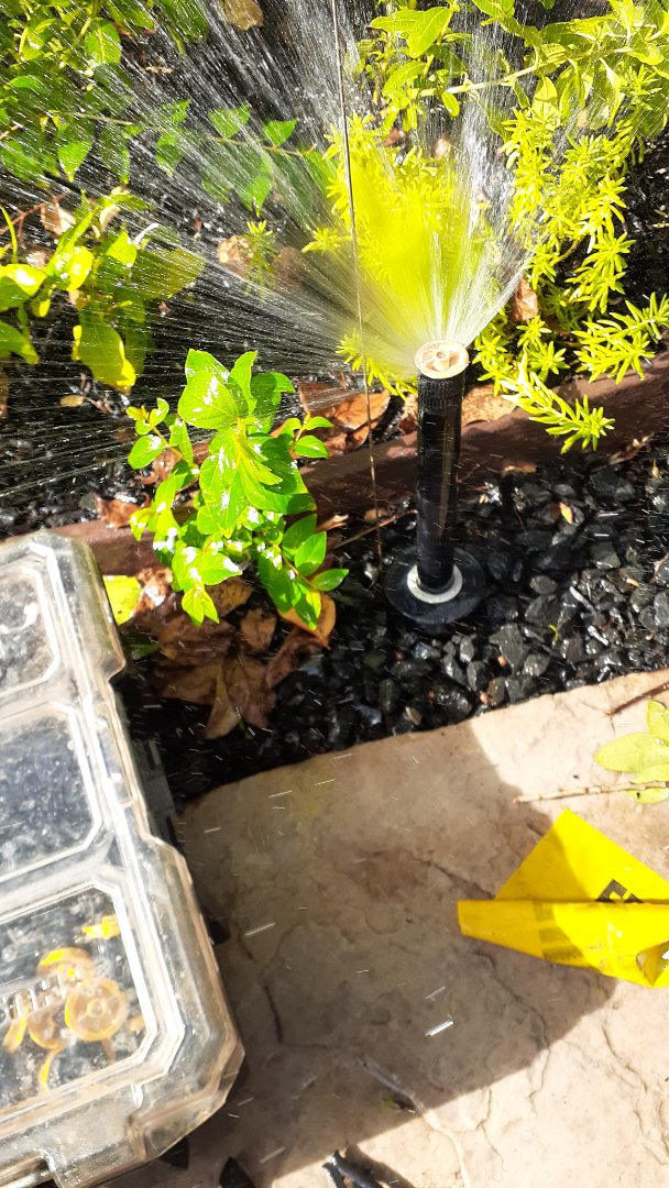 Bellaire, TX - Replacing sprinkler heads