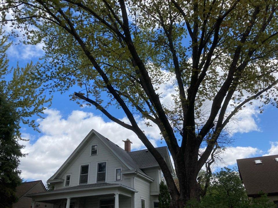Minneapolis, MN - Poured a new crown