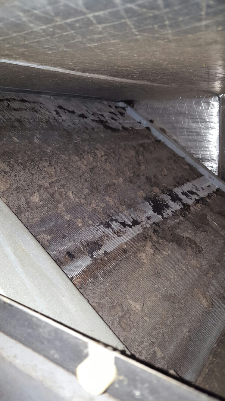 Gulfport, FL - Icp air handler with very dirty evaporator coil.