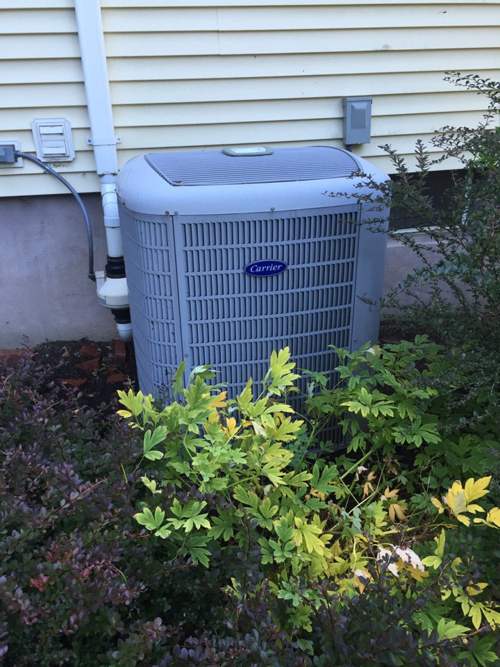 Randolph, NJ - Air conditioning service call. Inside blowing warm air. Found dirty outdoor unit. Repair with clean condenser rinse.